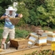 beekeeper showing frames from hives